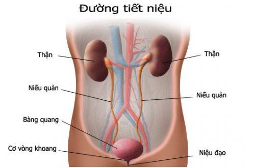 Viêm đường tiết niệu ở nam giới là gì, cách điều trị