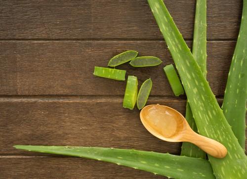 chữa viêm bao quy đầu bằng tinh dầu lô hội ( nha đam )
