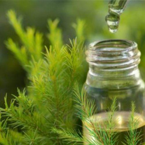 chữa viêm bao quy đầu bằng tinh dầu trà