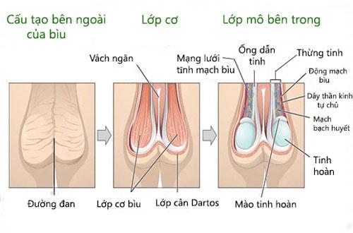 Bìu và những bệnh lý liên quan đến bìu ở nam giới